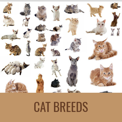 -CAT-BREEDS-Word-Search