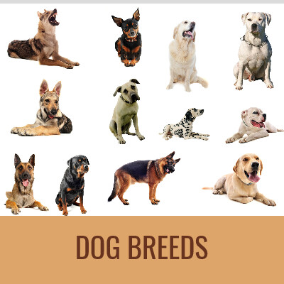 Dougpuzzlecom-DOG-BREEDS-Word-Search